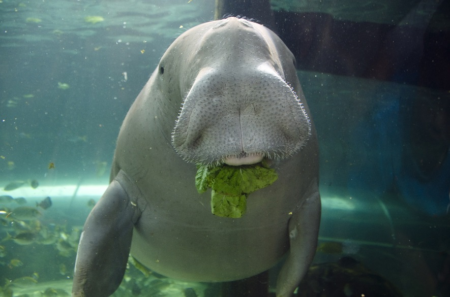 In Rumi's poem The Force of Friendship, a dugong finds a special pearl