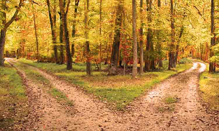 13_roads_diverged_in_a_yellow_wood1 Please reconsider your current approach