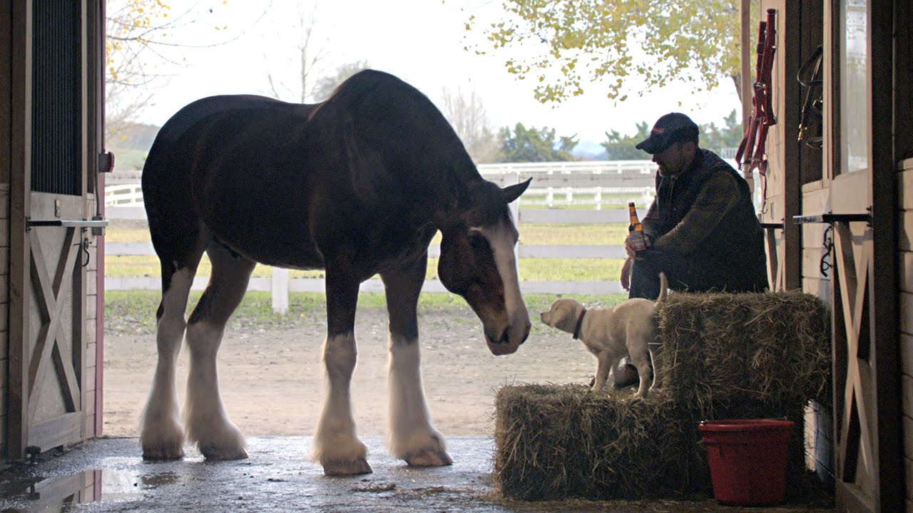 Super Bowl Ad Clydesdale Puppy I wish to speak to the entire world