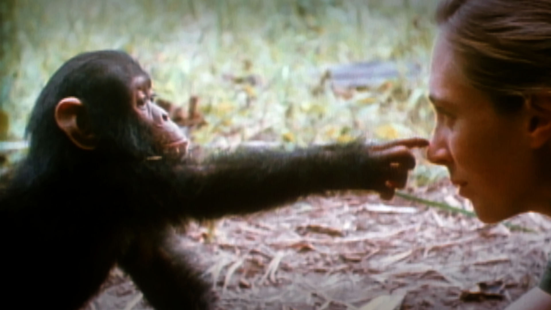 jane-goodall-birthday-80 What is the song that the singer must sing?