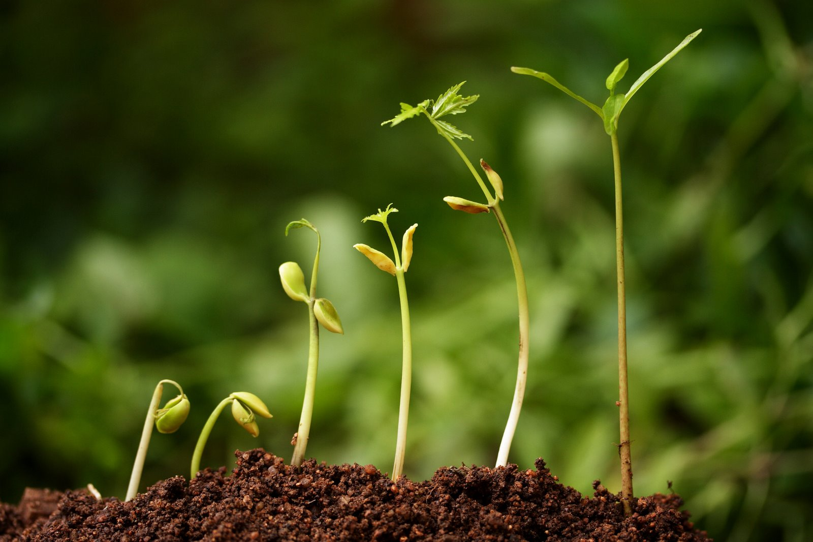 Seedlings in various stages of growth. Let this teaching find its place among my people.